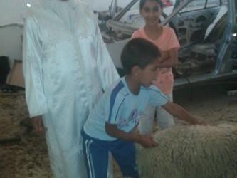 aid mouton don 100 €